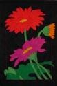 Flowers - Gerber Daisy