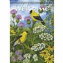 BirdsSale - Goldfin...